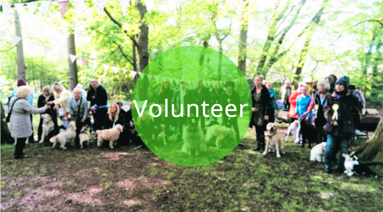 Volunteer at the LSA Civic Society